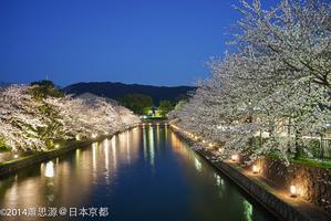 我如何躲過人潮在京都遇上最美麗的櫻花